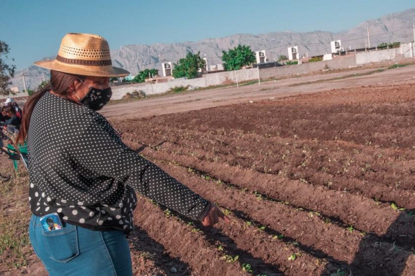 Huerta en el Ex FOECYT ayudará con refuerzo nutricional a Comedores y Merenderos de Rawson