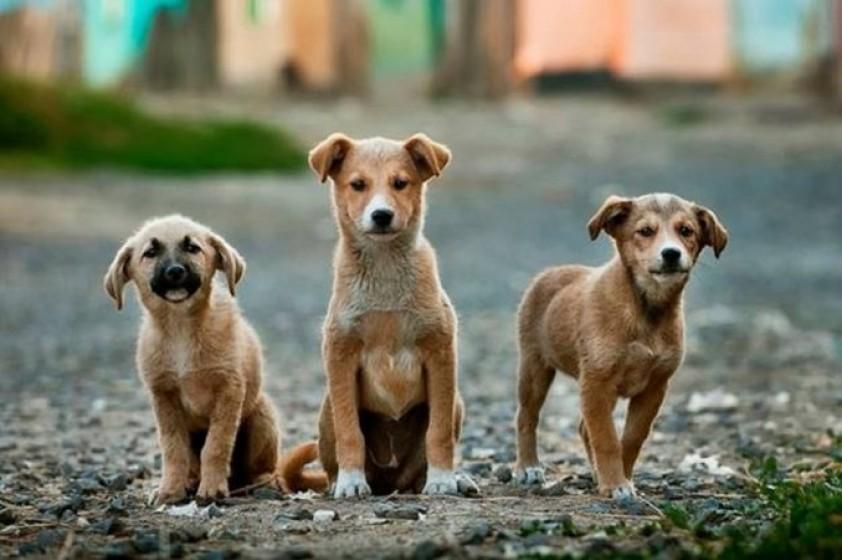 Cuidado Responsable y Salud Animal