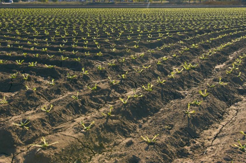 El Municipio brindará asistencia a productores afectados por colapso de pozo